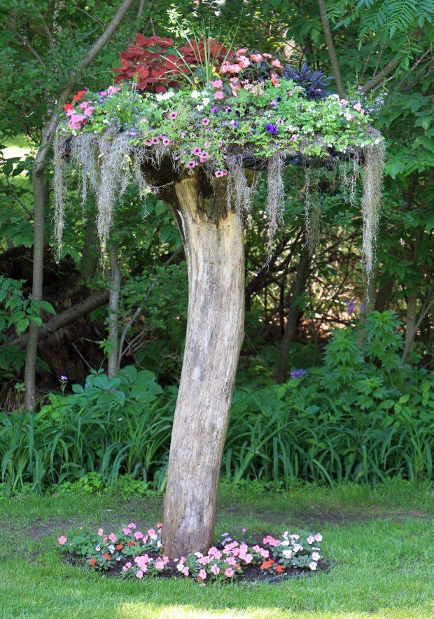 Сухие деревья ландшафтном дизайне