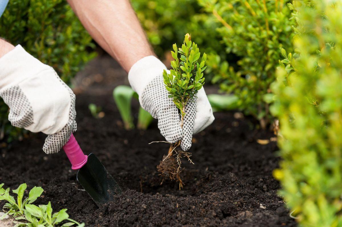 Какие многолетники сажают осенью семенами Портал 18