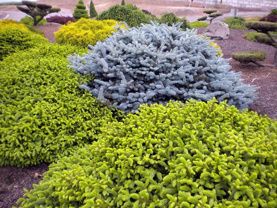 Купить растения для сада олх, рузаевка