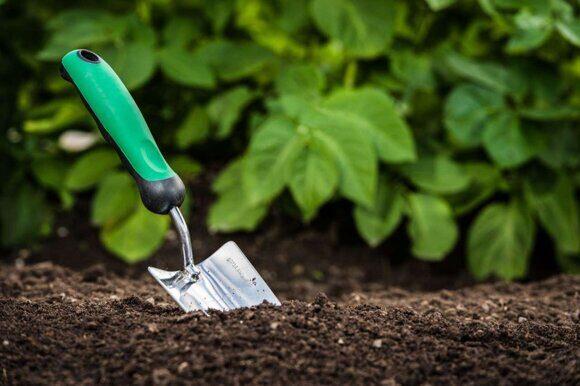 почва1