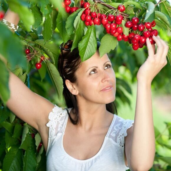 cherrypickingwomanmain.jpg